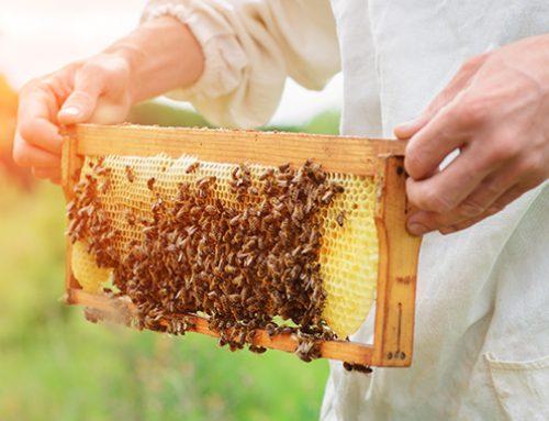 Vraag alvast een gratis sample aan: de Plukkruidje honing sticks zijn er